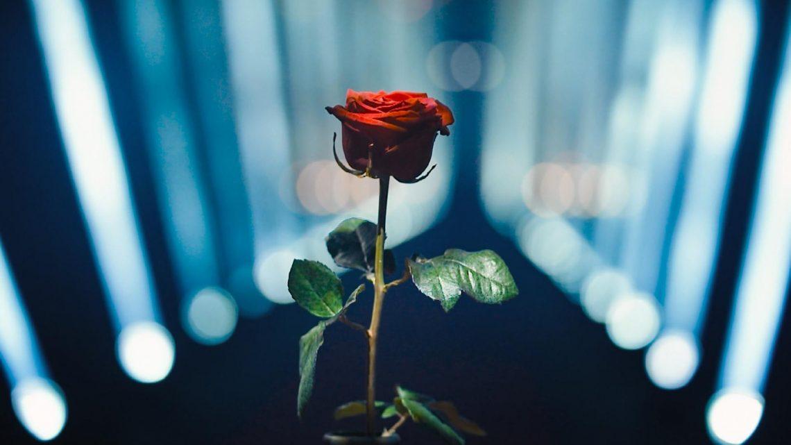 Nach Hin und Her: Sie bekommt die letzte Bachelor-Rose
