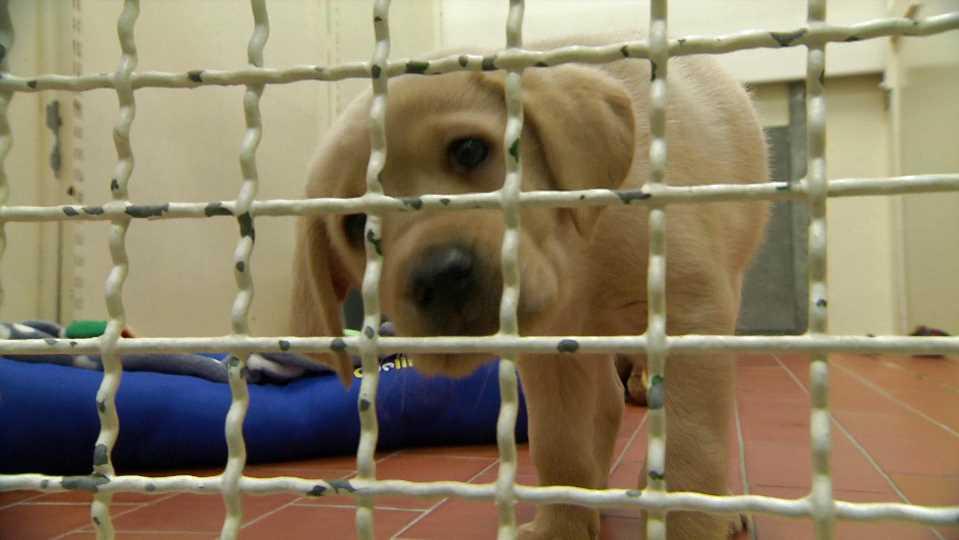 Hamburger CDU fordert: Steuer für Tierheimhunde abschaffen!