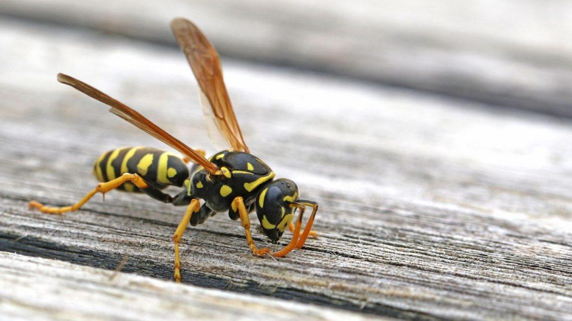 Wespenstich behandeln: Die besten Tipps gegen Juckreiz & Schwellung