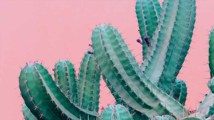 Kakteen, Aloe vera + Co.: Wüstenpflanzen sind der neue Beauty-Trend