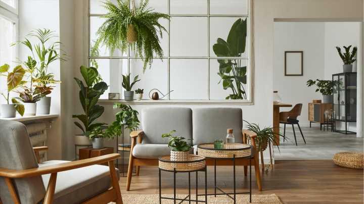 So einfach bringen Sie Dschungel-Feeling in Ihr Zuhause